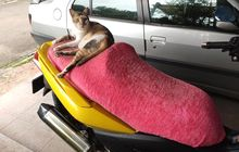 Dua Cara Ampuh yang Bikin Kucing Ogah Cakar Jok Motor, Boleh Dicoba!