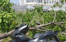 Honda PCX 150 Ketimpa Pohon, Pemilik Minta Ganti Rugi Ditolak, Disebut Bencana Alam
