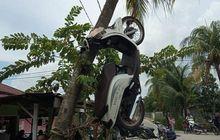 Rasain Akibatnya, Gara-gara Barang Haram Honda Scoopy Digantung di Pohon Kelapa