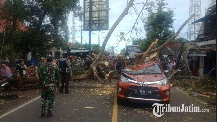 Pohon tumbang menimpa Toyota Calya di desa Tanah Merah, Bangkalan, Madura, Jawa Timur
