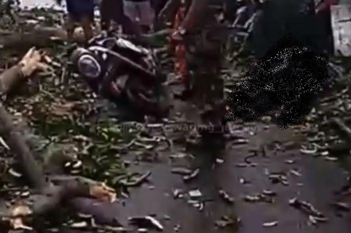 pengendara Honda SCoopy tewas tertimpa pohon tumbang di Bali