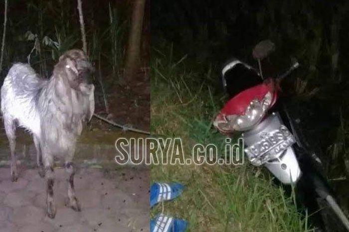 Suzuki Shogun 125 milik pencuri kambing yang ditinggal di sawah