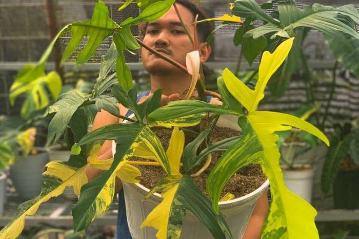 Iqbal berpose dengan bunga philodendron hasil barter mobil.