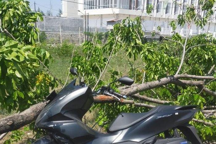 Honda PCX 150 milik Ahmad Nur Solihin saat tertimpa pohon di jalan arteri Yos Sudarso, kota Semarang, Jawa Tengah